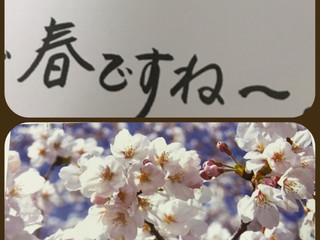 桜のおたより