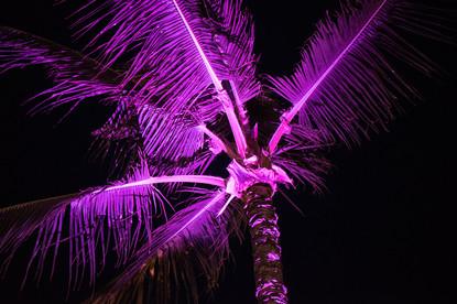 Tree Lights 4