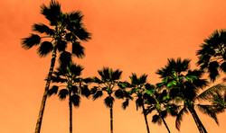 Infrared Palms