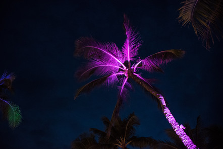 Tree Lights 3