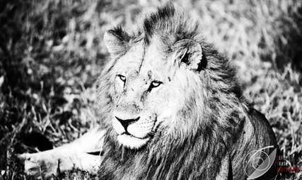 King of the Plains.jpg