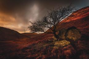 Solitary Tree, Glen Rosa