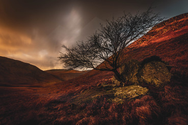 Solitary Tree, Glen Rosa
