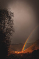 Rosa Rainbow