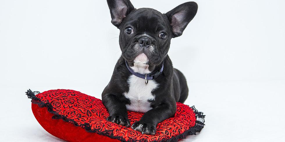 A Puppy's Journey- Online Webinar