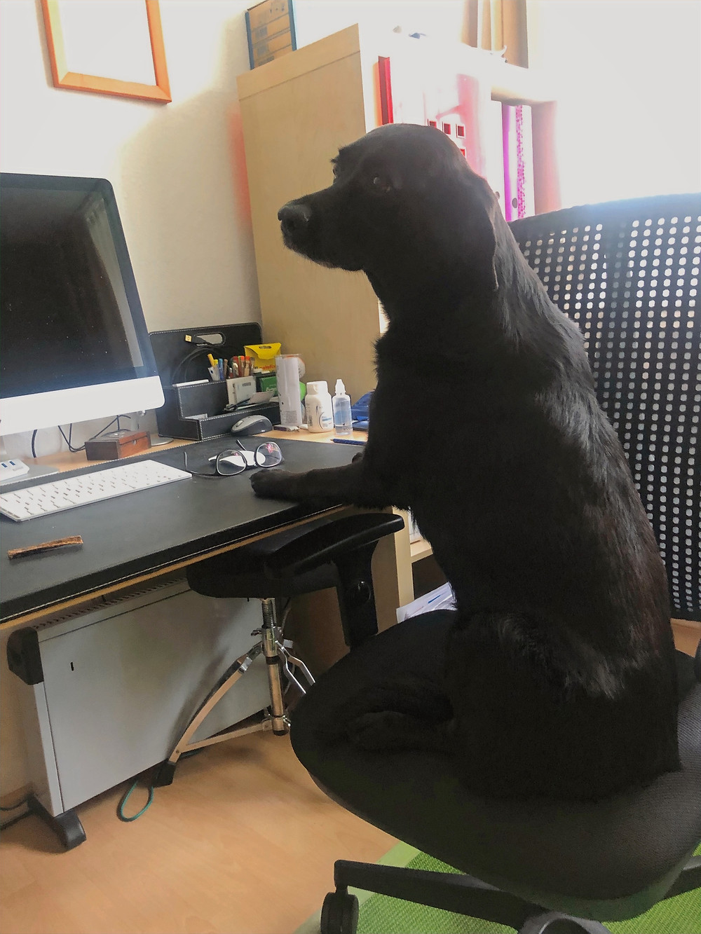 Schwarzer Hund sitzt an einem Schreibtisch