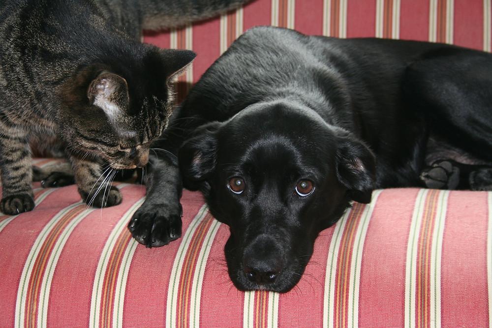 schwarzer Hund und Katze auf einer Couch