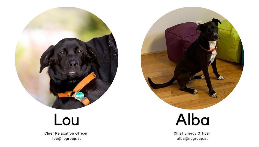 Zwei Hunde und deren Kontaktdaten