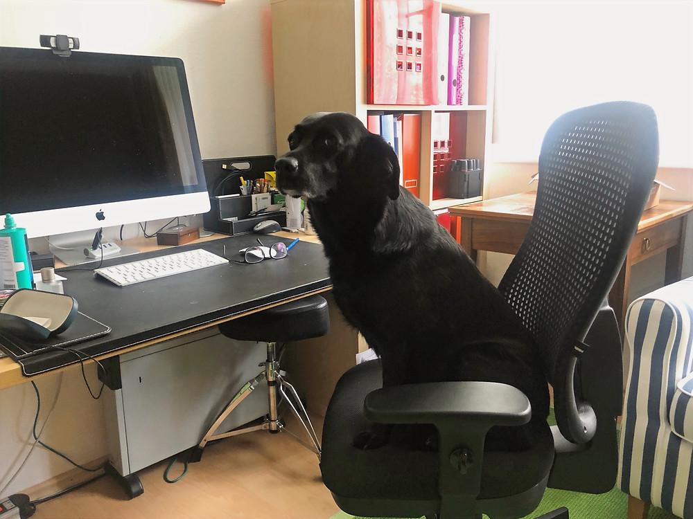 Hund sitzt am Schreibtisch