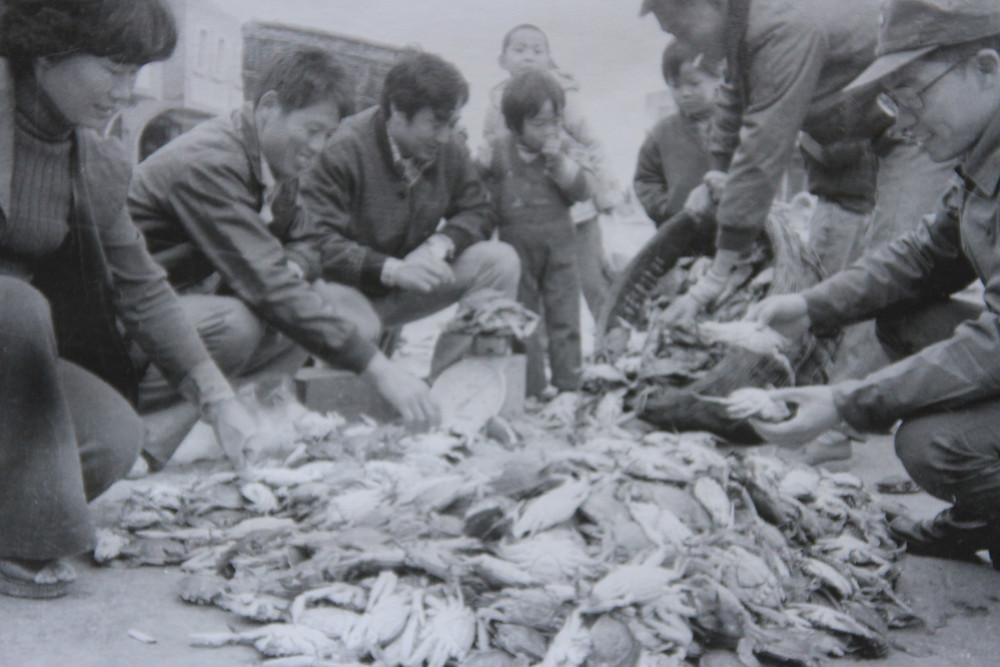 馬祖早年為漁業社會