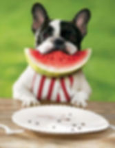 a1a happy dog watermelon in mouth 2254_1