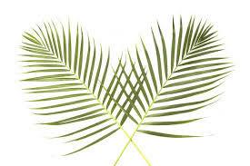 palm branches.jpg