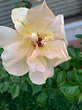 flower 3.jpg