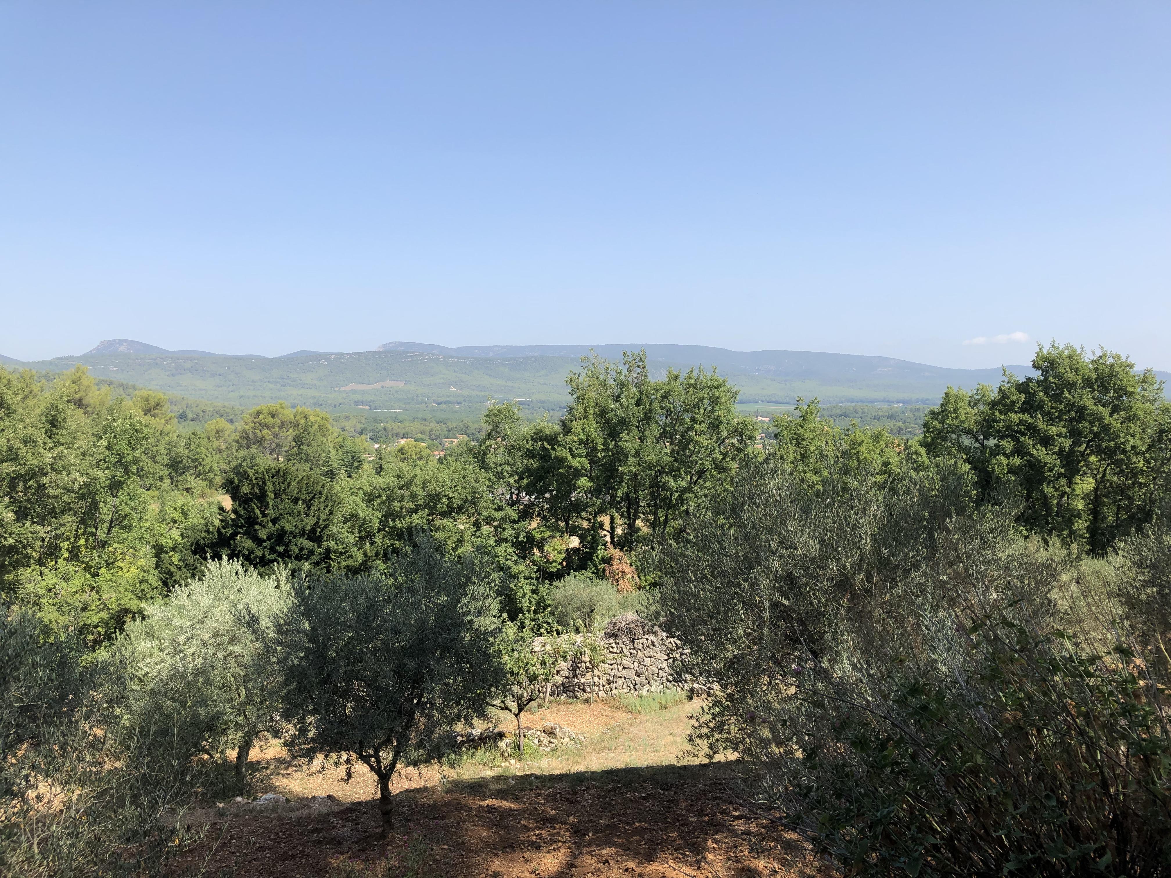 olivier.jpeg