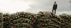 Christmas Tree Farm Inverness