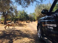 Excursion dans l'arrière pays de Rhodes