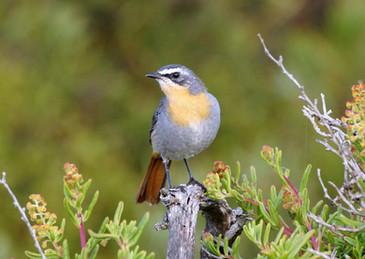 PL la Grange 2 - Cape Robin-Chat (Dwarsr