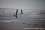 Victor Hulme Chasing gulls.jpg