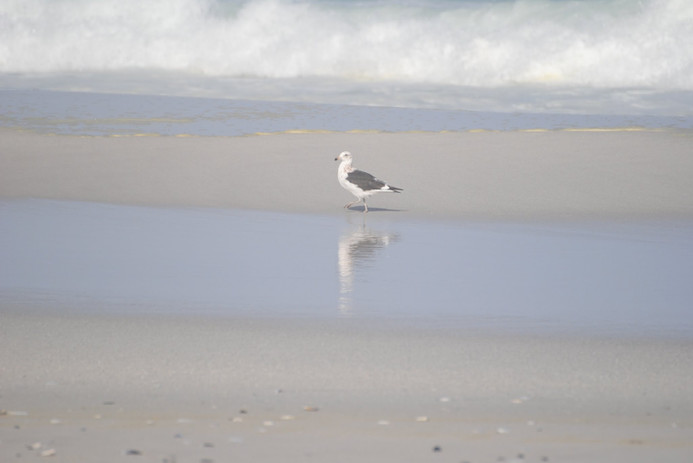 Sue Galloway - Reflections.jpg