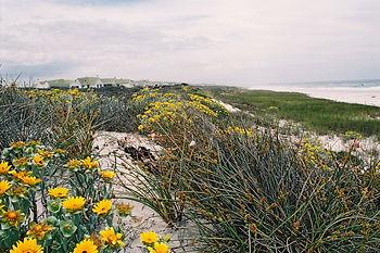 Kirstin v T-Pieterse Along the dunes (no