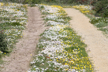 Sue Galloway - The Road Paved With Flowe