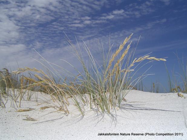 Dune fringe.jpg