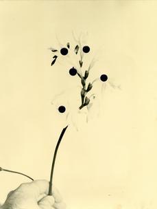 Flowers For Henriette  (28 Vignon Street Edition) #3