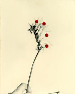 Flowers For Henriette  (28 Vignon Street Edition) #4