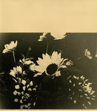 Untitled (Square Of Flowers), 2020