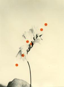 Flowers For Henriette (28 Vignon Street Edition) #6