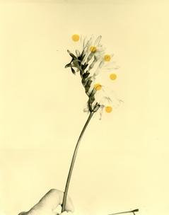 Flowers For Henriette (28 Vignon Street Edition) #1