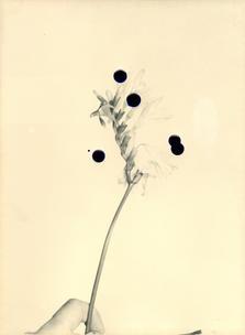 Flowers For Henriette (28 Vignon Street Edition) #5