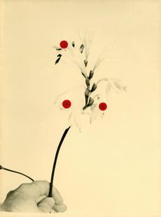Flowers For Henriette (28 Vignon Street)