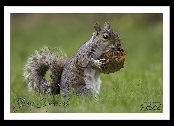 Squirrel & The Cupcake