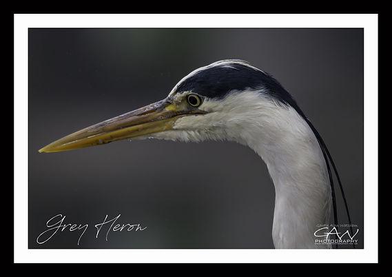Heron Framed