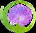 AlliumLogo-04%20(1)_edited.png
