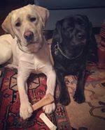 Nash and Mellow