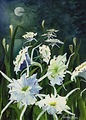 Cahaba Lilies by Moonlight, Frances Ross
