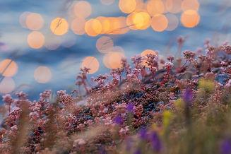 sunset-4837406_1920.jpg
