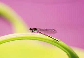 dragonfly-4080782_1920.jpg