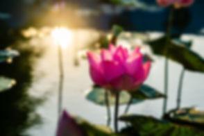 flower-5133739_1920.jpg