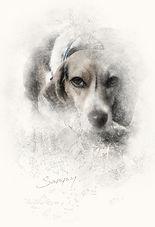 PawArt Sketch  |  Sammy