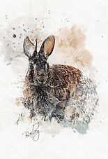 PawArt Watercolor  |  Bailey