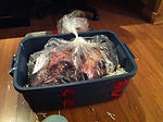 Salmon Arm European Mount Taxidermist, beetle skull clleaning, hunting BC grizzly bear,