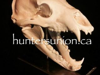 Now Selling Custom Pedestal Skull Stands