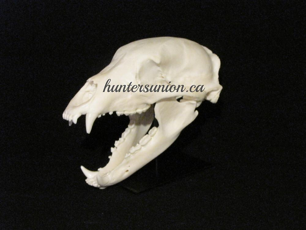 Black skull stand