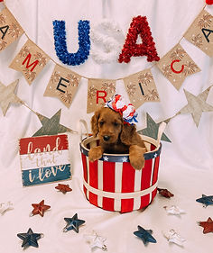 Image-Coming-Soon-NAR-Puppies-Photoshop.