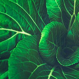 Natural NZ Vegetable Garden
