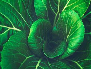 Food Week Blog - Fall 2020