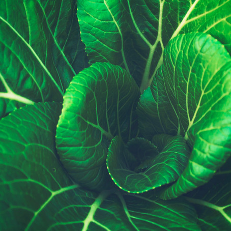 "Three Reasons to Add Chinese Cabbage ""Won Bok"" to Your Diet"